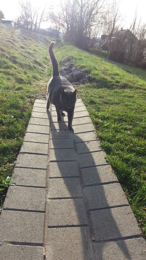 Gatto nero dolce fotografia stock libera da diritti