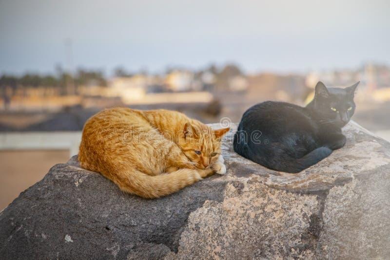 Gatto nero e rosso che si trova sulla pietra, sul riposo e sul sonno fotografia stock