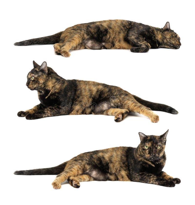 Gatto nero e sonno giallo del modello isolati su fondo bianco fotografie stock