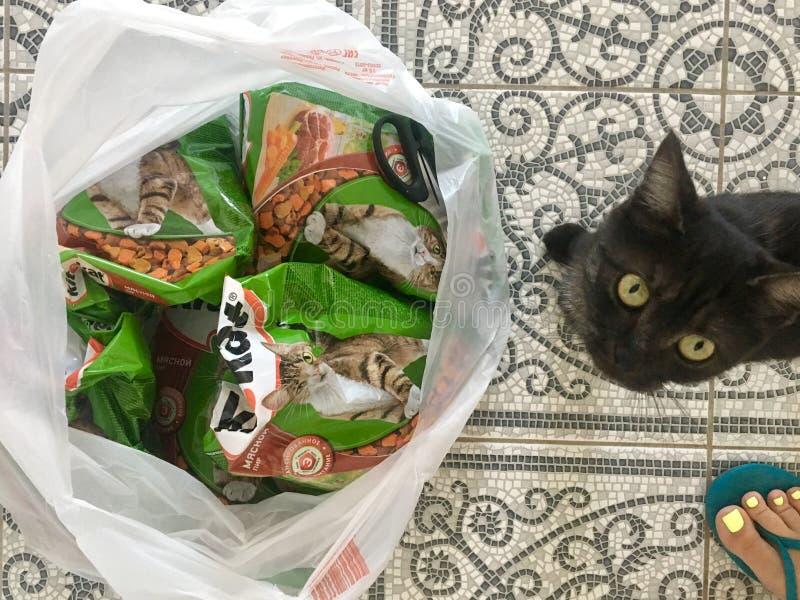Gatto nero ed alimentare kitiket immagine stock