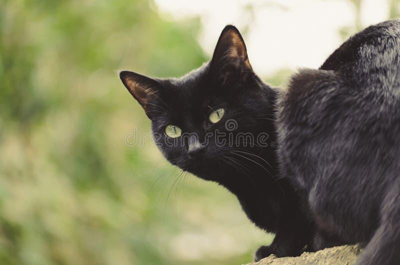 Gatto nero fuori fotografie stock