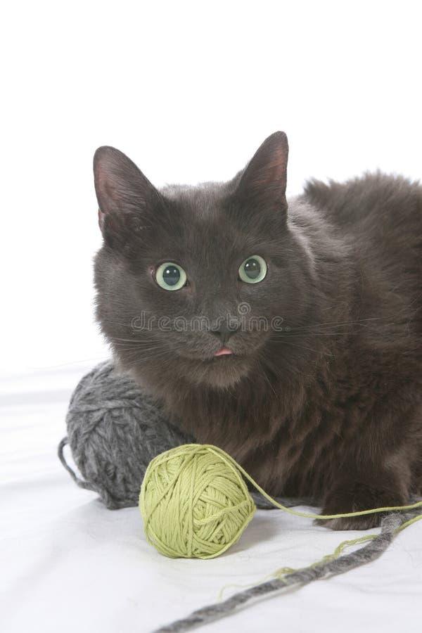 Gatto nero impertinente con le sfere di filato fotografia stock libera da diritti