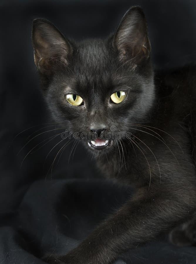 Gatto nero spaventoso immagine stock libera da diritti