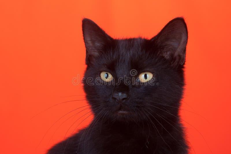 Gatto nero su priorità bassa arancione fotografia stock libera da diritti