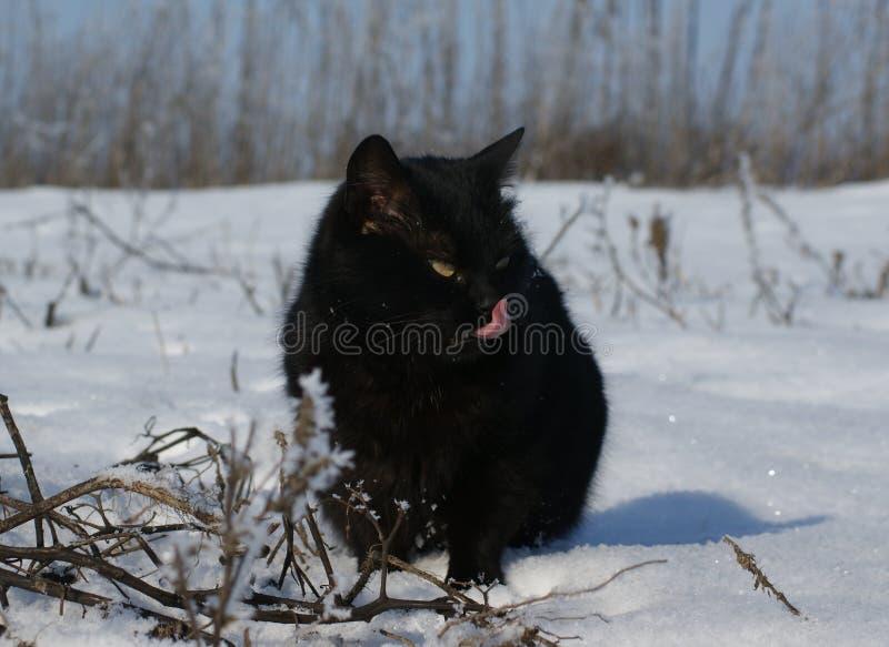 Gatto nero su una passeggiata di inverno fotografie stock libere da diritti