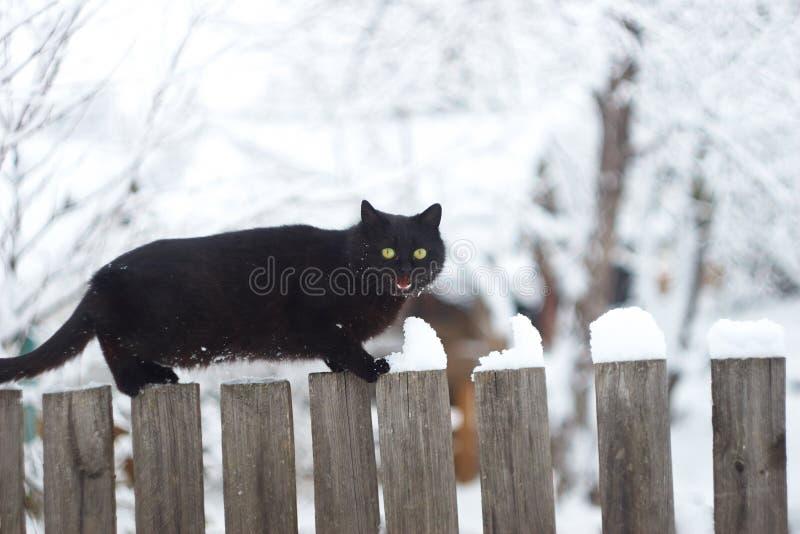 Gatto nero sui precedenti di inverno fotografia stock