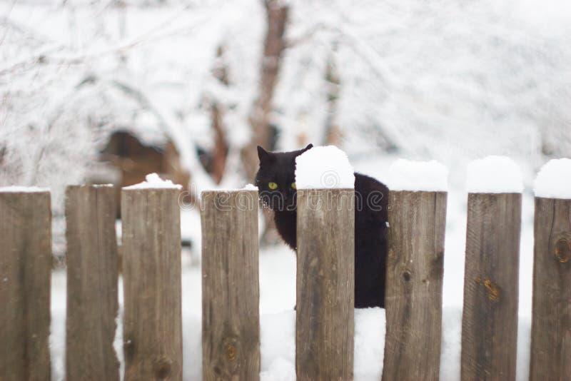 Gatto nero sui precedenti di inverno immagine stock libera da diritti