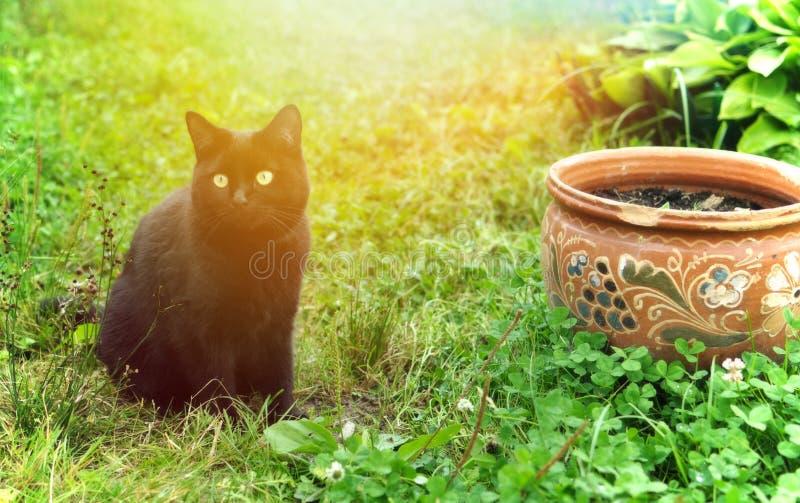Gatto nero in un giardino di estate fotografia stock libera da diritti