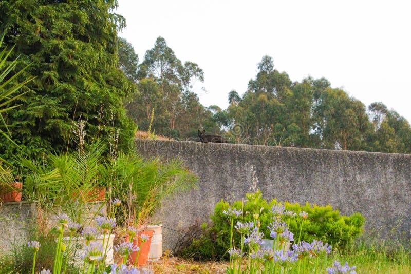 Gatto nero in un paesaggio verde fotografie stock