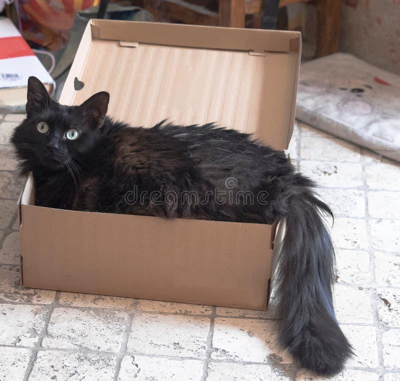 Gatto nero in una scatola fotografie stock libere da diritti