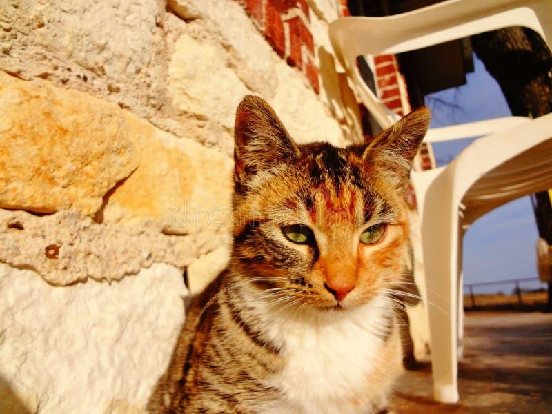 Gatto pacifico fotografie stock