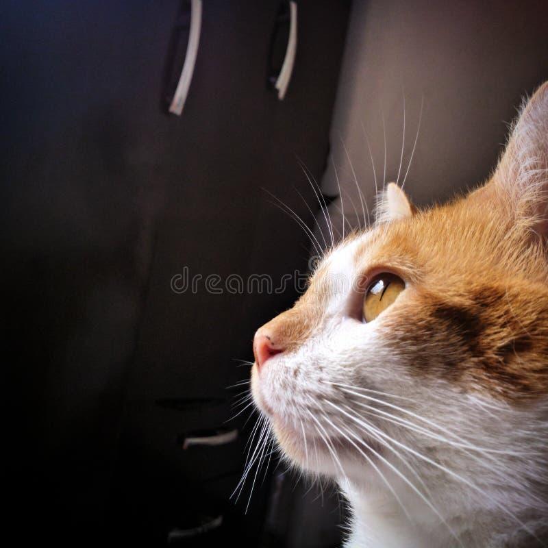 Gatto pacifico fotografia stock