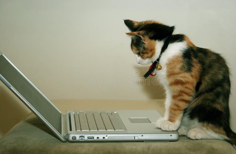 Gatto per mezzo del calcolatore fotografie stock