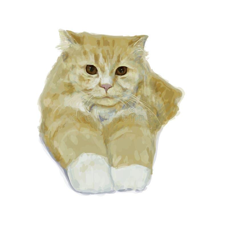 Gatto persiano adorabile che si trova e che allunga gamba su backgroun bianco illustrazione di stock