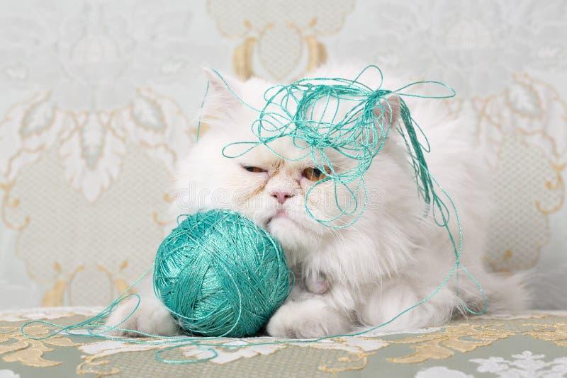 Gatto persiano bianco che ottiene infastidito da lana immagini stock