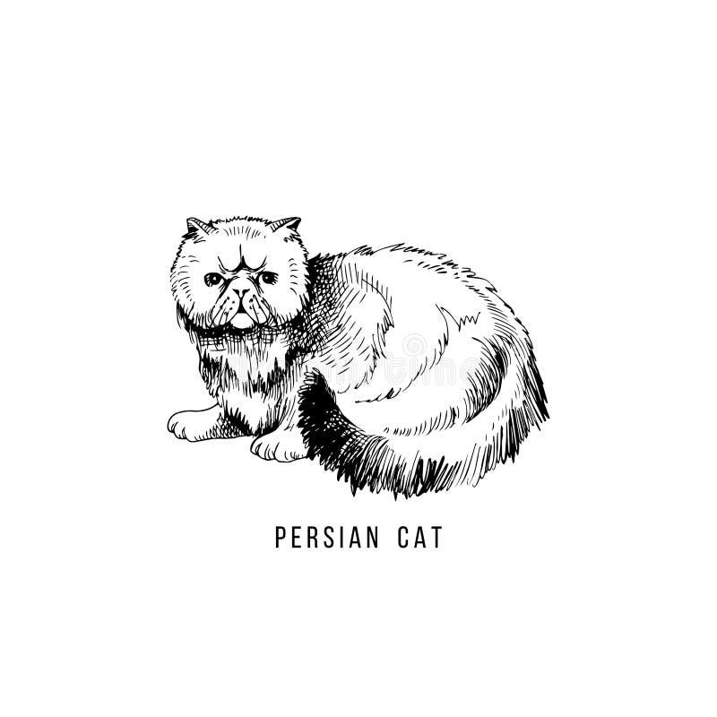 Gatto persiano disegnato a mano illustrazione di stock