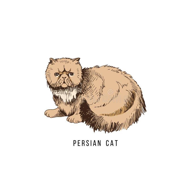 Gatto persiano disegnato a mano illustrazione vettoriale