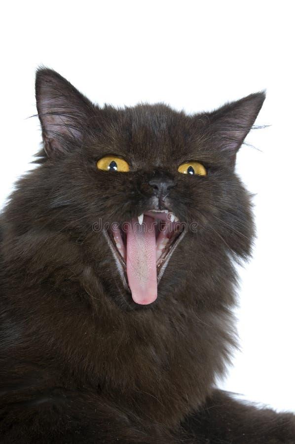 Gatto persiano nero immagini stock libere da diritti