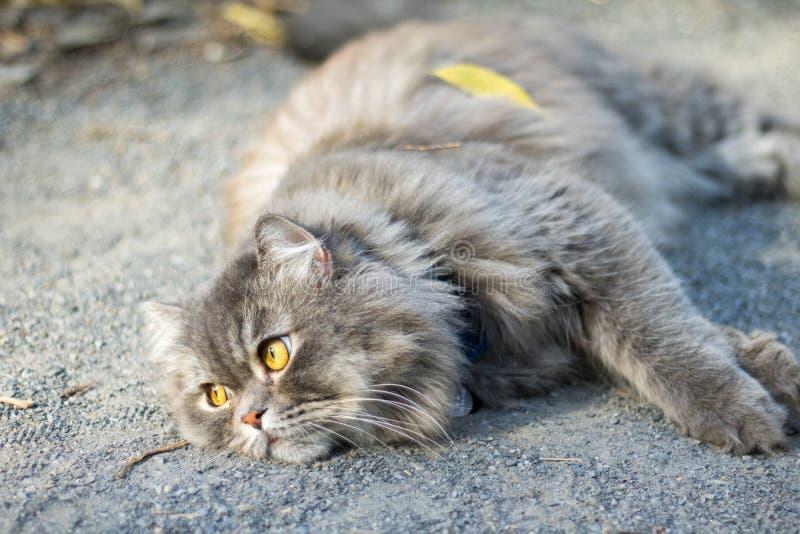 Gatto pigro fotografia stock