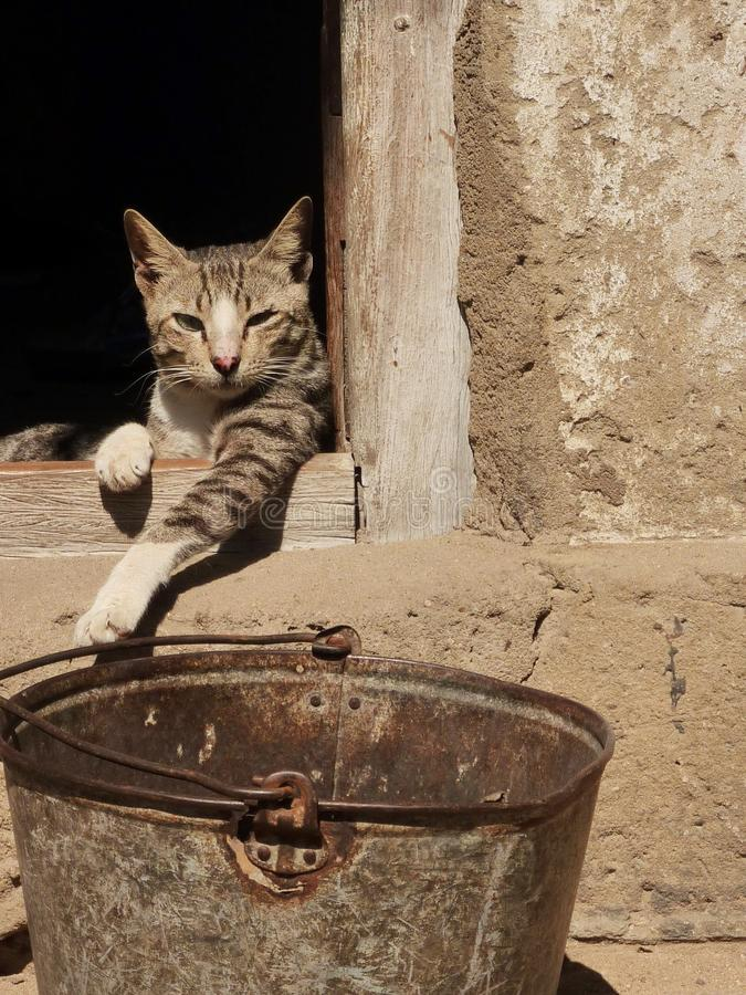 Gatto pigro in Africa fotografia stock libera da diritti