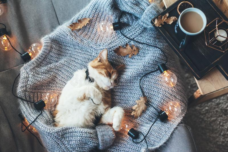 Gatto pigro che dorme sul maglione di lana fotografie stock