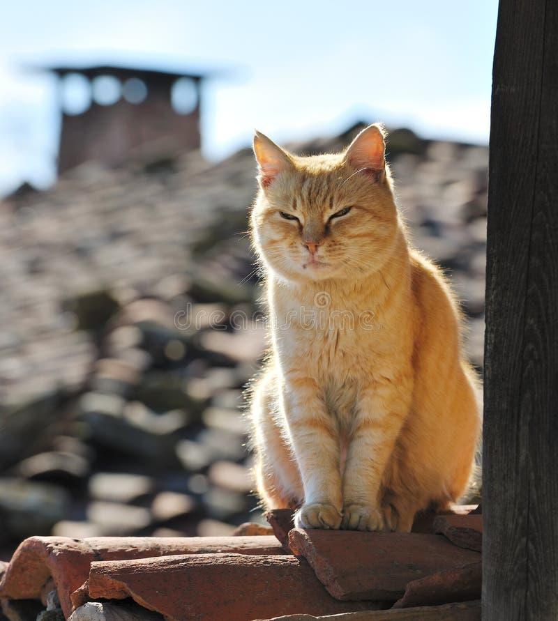 Gatto pigro sul tetto fotografie stock