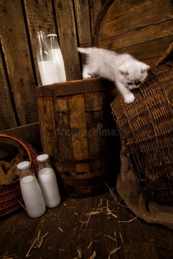 Download Gatto purulento con latte fotografia stock. Immagine di felino - 30830356