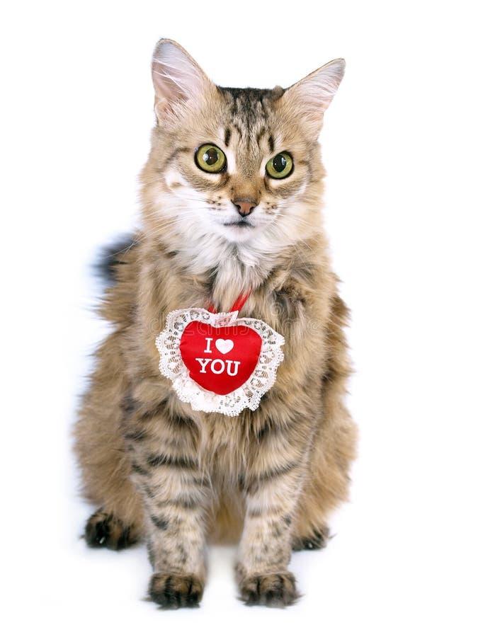 Gatto rosso del biglietto di S. Valentino immagine stock