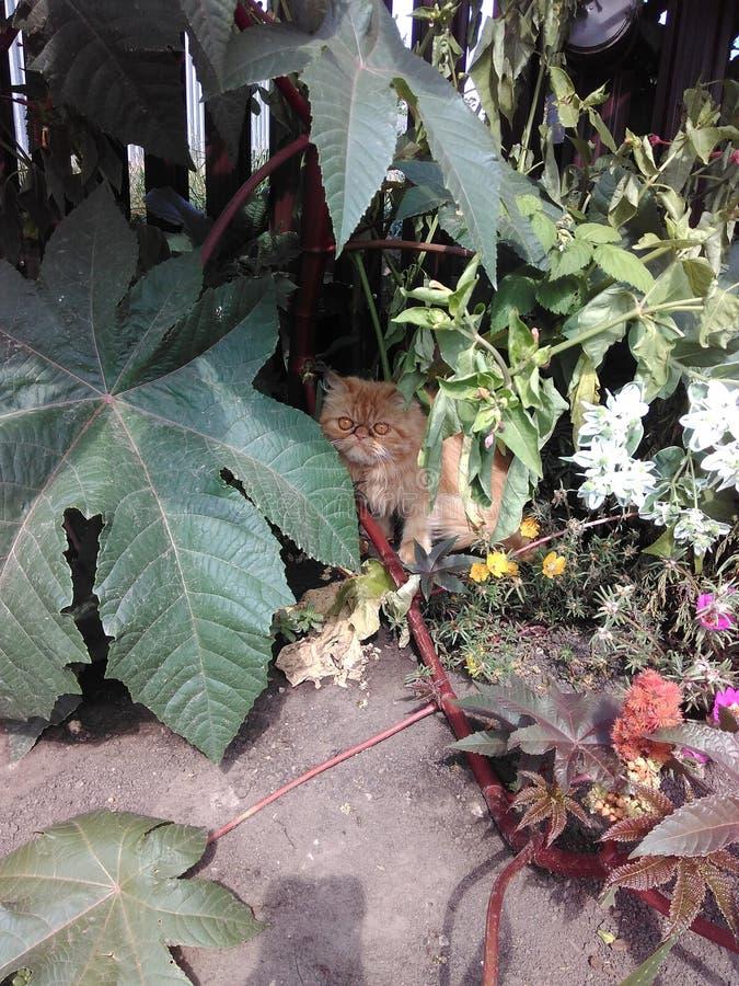 Gatto rosso dietro un fiore del giardino immagine stock libera da diritti