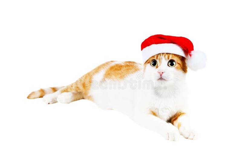 Gatto rosso e bianco sveglio in cappello della Santa fotografia stock libera da diritti