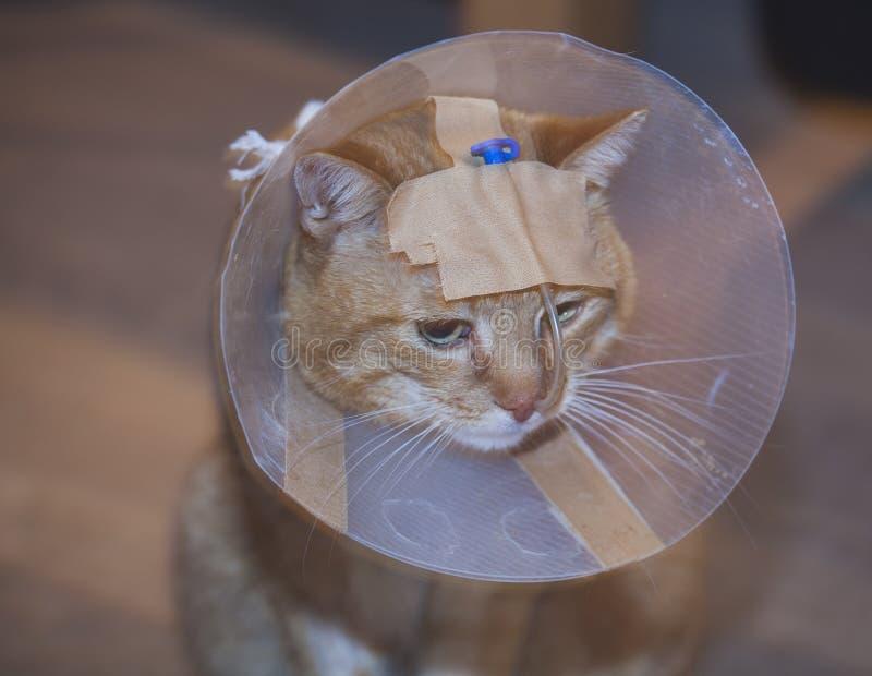 Gatto malato con il cono ed il tubo immagini stock