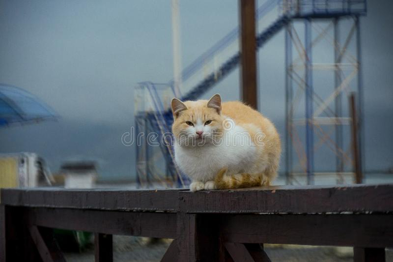 Gatto rosso senza tetto, i precedenti - la spiaggia fotografia stock