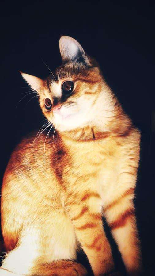 Gatto rosso su un fondo scuro immagini stock libere da diritti