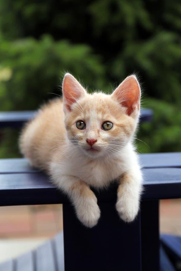 Gatto rosso sveglio che riposa nel giardino immagine stock