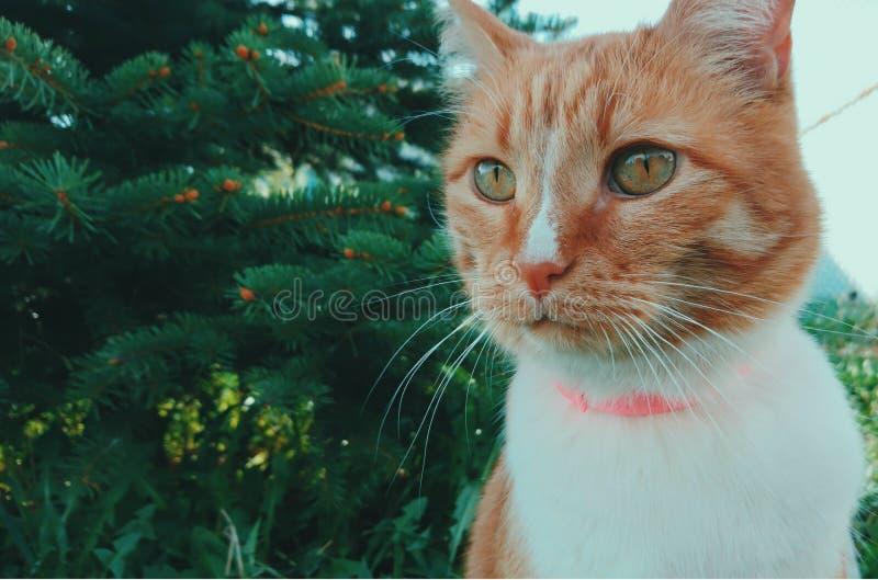 Gatto rosso sveglio che si siede vicino ad un albero di Natale immagine stock libera da diritti