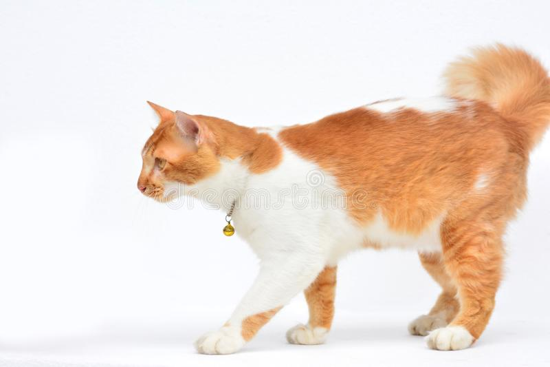 Gatto rosso sveglio su fondo bianco fotografia stock
