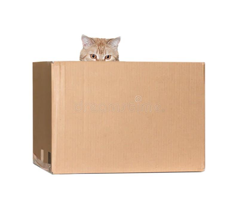 Download Gatto rosso in una scatola immagine stock. Immagine di occhi - 56883897