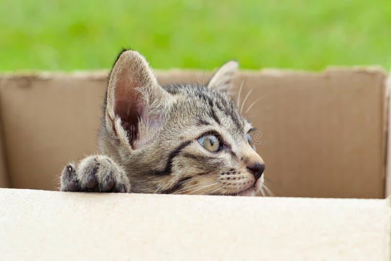 gatto in scatola di cartone su fondo verde immagini stock libere da diritti
