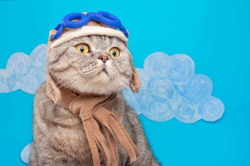 Gatto scozzese sveglio nel casco dell'aviatore sui precedenti delle carriole fotografia stock libera da diritti