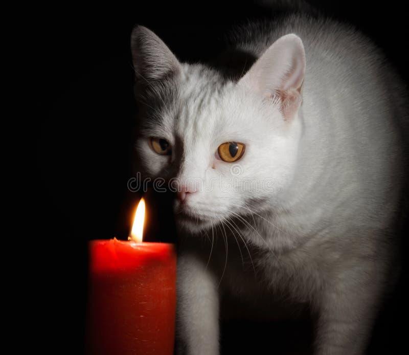 Gatto scuro - con il grande demone giallo osserva - fondo nero fotografia stock
