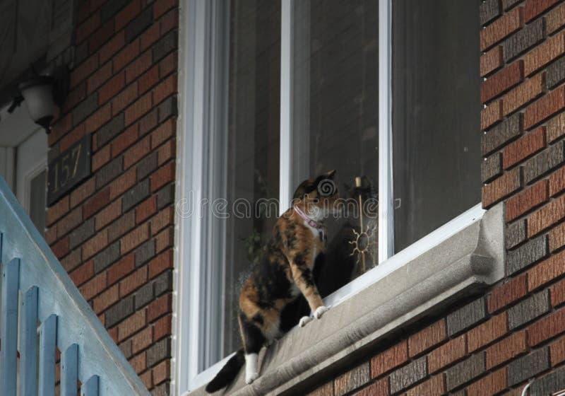 Gatto seduto sul bordo di una finestra fotografia stock libera da diritti