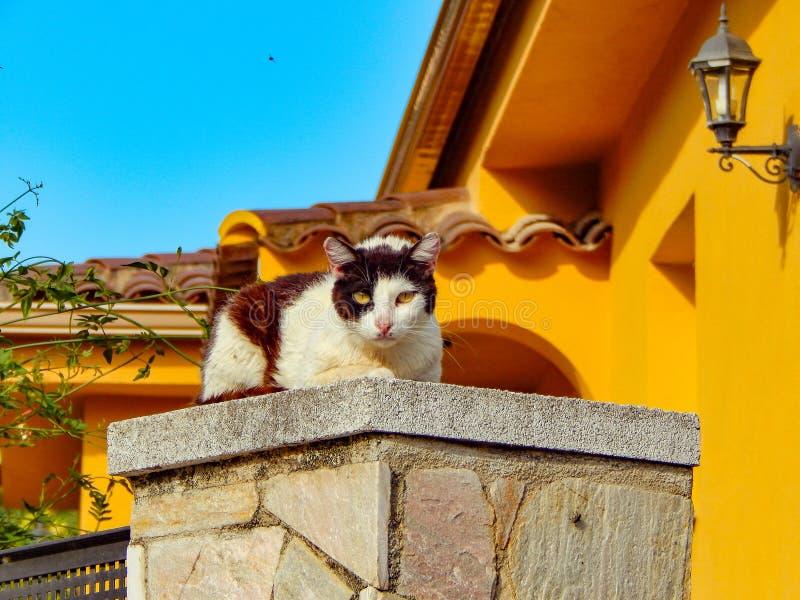 Gatto severo fotografia stock
