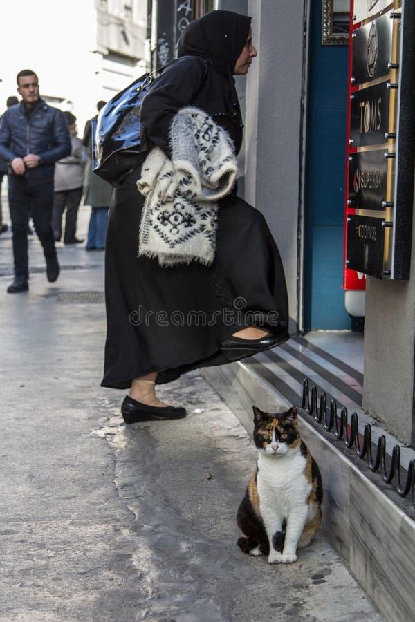 Gatto smarrito che sta davanti ad un negozio mentre una donna musulmana che indossa l'abbigliamento modesto con la sciarpa tradiz fotografie stock