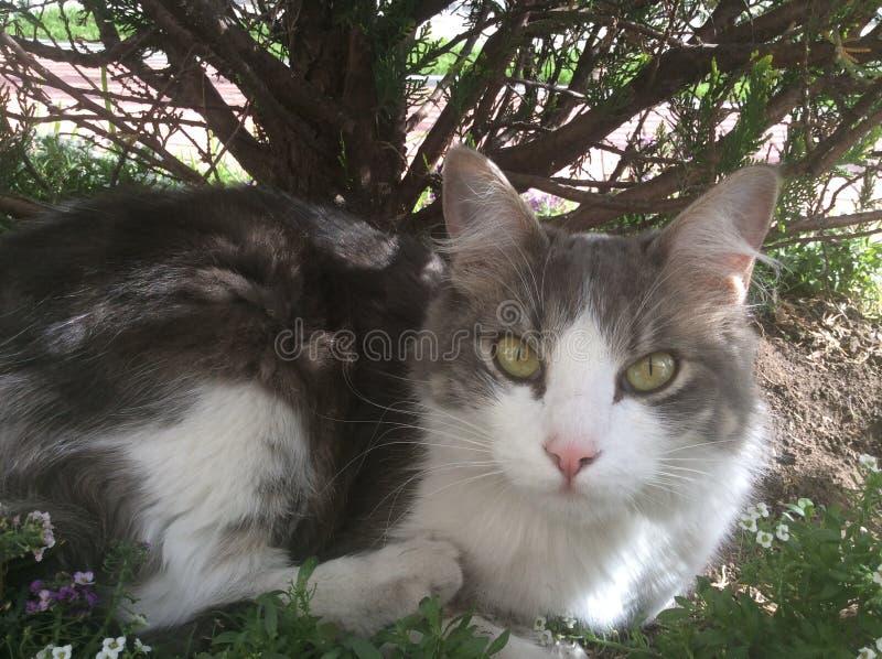 Gatto sotto l'albero fotografia stock