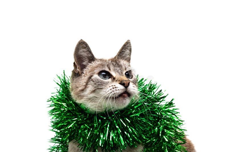 Gatto a strisce bianco con una decorazione verde di Natale, isolato immagini stock