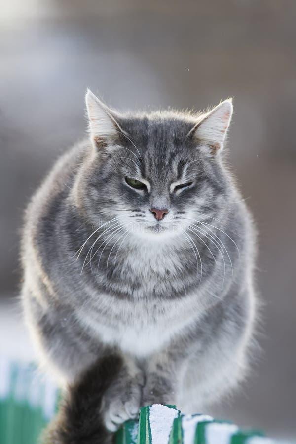 Gatto a strisce grigio che si siede su un inverno di for Il gatto inverno