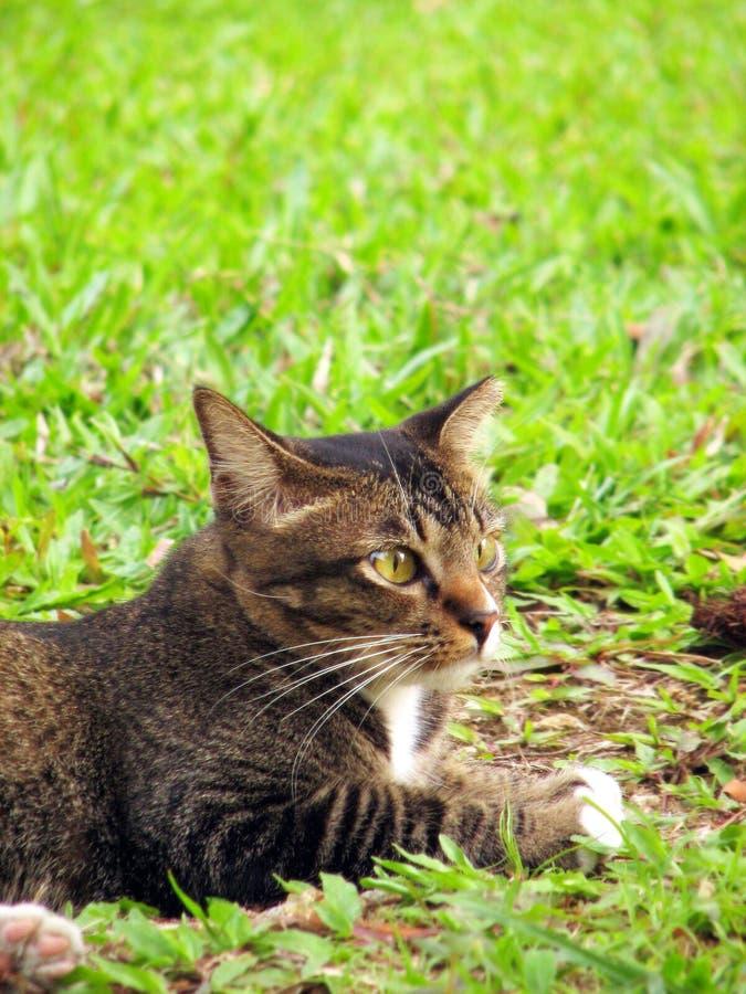 Gatto su erba fotografia stock