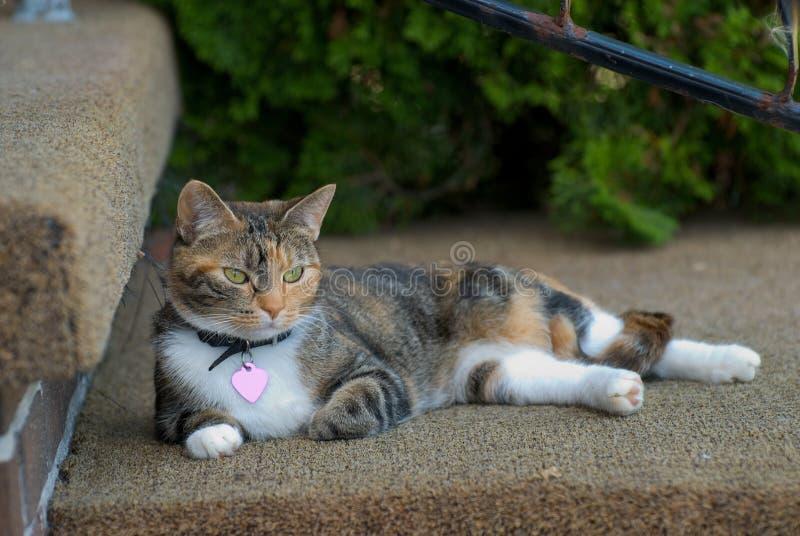 Gatto su un punto fotografia stock