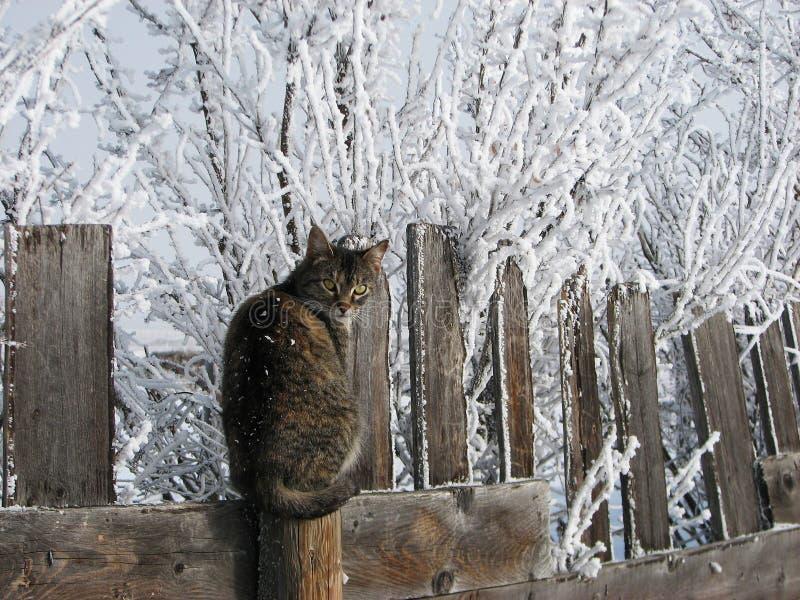 Gatto su una rete fissa fredda della plancia immagini stock libere da diritti