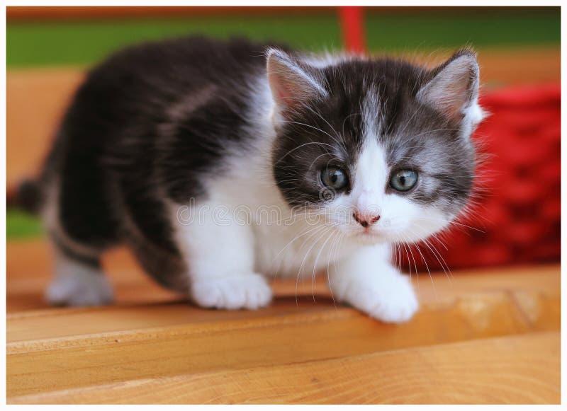 Gatto sul banco fotografia stock
